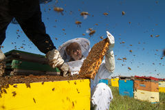 Apiarist που προσέχει πέρα από τις κυψέλες μελισσών του Στοκ Εικόνα