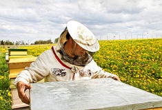 Apiarist. Working apiarist in a spring season Royalty Free Stock Photo