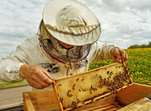 Apiarist. Working apiarist in a spring season royalty free stock photography