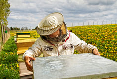Apiarist. Working apiarist in a spring season Royalty Free Stock Images