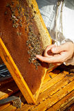 Apiarist. Is working in his apiary Stock Image