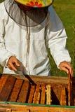 Apiarist. Working apiarist in autumn season Royalty Free Stock Photography