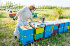 Apiarist, apicultor que trabaja en colmenar Fotos de archivo