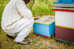 Apiarist, apicultor que trabaja en colmenar Foto de archivo libre de regalías