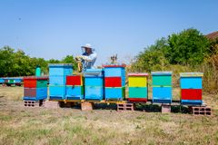 Apiarist, beekeeper жмет мед, год сбора винограда Стоковое Изображение