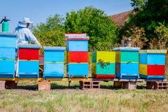 Apiarist, beekeeper жмет мед, год сбора винограда Стоковые Фото