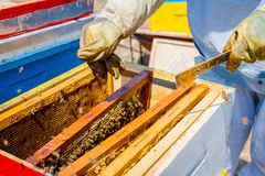 Apiarist, beekeeper жмет мед, год сбора винограда Стоковое Изображение RF