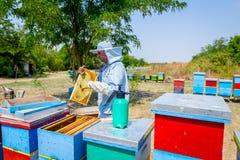 Apiarist, beekeeper жмет мед, год сбора винограда Стоковая Фотография
