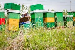 Apiarist, beekeeper проверяет пчел на рамке сота деревянной Стоковое Изображение RF