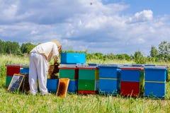 Apiarist, beekeeper проверяет пчел на рамке сота деревянной Стоковые Фото