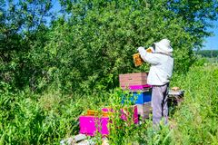 Apiarist, beekeeper is checking bees on honeycomb wooden frame stock photos