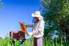 Apiarist, beekeeper is checking bees on honeycomb wooden frame. Beekeeper is looking swarm activity over honeycomb on wooden frame, control situation in bee royalty free stock photography