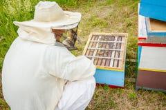 Apiarist, beekeeper working in apiary stock image