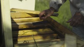 Apiarist bierze honeycombs od ula zbiory wideo