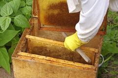 Apiarist and box with honeycombs Stock Photos