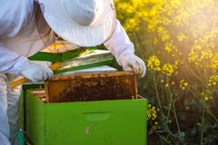 Apiarist checking the hives Royalty Free Stock Photography