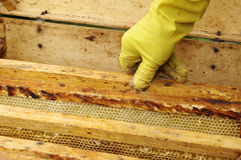 Apiarist hand and box with honeycombs Royalty Free Stock Images