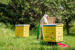 Apiarist man working in nature in summer Stock Photos