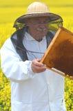 Apiarist mayor que trabaja en el campo floreciente de la rabina Fotografía de archivo libre de regalías