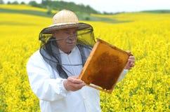 Apiarist mayor que trabaja en el campo floreciente de la rabina Foto de archivo