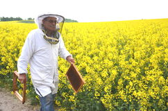 Apiarist mayor que trabaja en el campo floreciente de la rabina Fotos de archivo