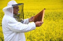 Apiarist mayor que trabaja en el campo floreciente de la rabina Imagen de archivo