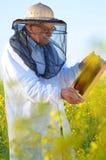 Apiarist mayor que trabaja en el campo floreciente de la rabina Fotografía de archivo