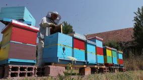 Apiarist, pszczelarka zbiera miód, rocznik zdjęcie wideo
