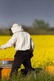 Apiarist in rapeseed field. Apiarist working in rapeseed field in springtime Royalty Free Stock Image