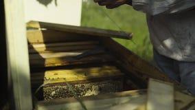 Apiarist stoi blisko ula sprawdza honeycombs zbiory
