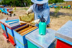 Beekeeper is using bristle to get rid of bees. Apiarist sweeps out bees from honeycomb with brush to extract honey, harvest time Royalty Free Stock Photography