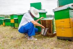 Apiarist, trabajo sin guantes del apicultor con las abejas Fotografía de archivo libre de regalías