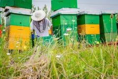 Apiarist, trabajo sin guantes del apicultor con las abejas Foto de archivo