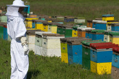 Apiarist watching over his bee hives. Horizontal photo of a beekeeper in white protection suit watching over his bee hives on a green field Stock Photo