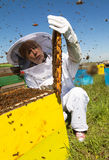 Apiarist watching over his bee hives. Vertical photo of a woman beekeeper in white protection suit watching over his bee hives Stock Photos