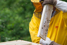 Apiarist working. With bees and hives Royalty Free Stock Image