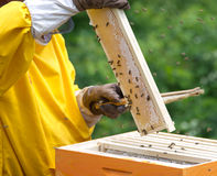 Apiarist working. With bees and hives Stock Images