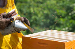 Apiarist working. With bees and hives in forest Stock Images