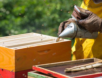 Apiarist working. With bees and hives in forest Royalty Free Stock Images