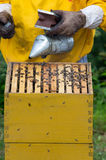 Apiarist working with bees. Apiarist working with smoker on beehive Stock Photos