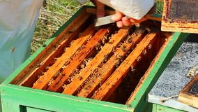 Apiarist working stock video footage