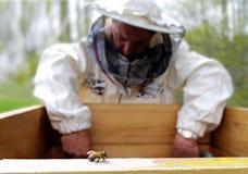 Apiarist y abeja. Foto de archivo libre de regalías