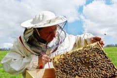 Apiarist y marco con las abejas. Foto de archivo libre de regalías