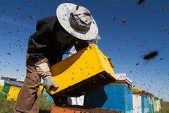 Apiarists, die an dem Feld mit Bienenstöcken arbeiten Lizenzfreie Stockfotos