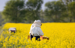Apiarists in rapeseed field Stock Photo