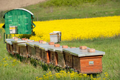 Apiary Royalty Free Stock Image