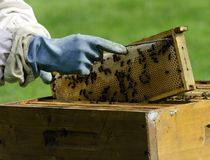 Apiary. An apiary at work royalty free stock photo