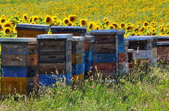 apiary Immagine Stock