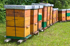 Apiary. A apiary boxes with bees stock image