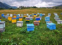 Apiary. On the meadow in Georgia royalty free stock photo